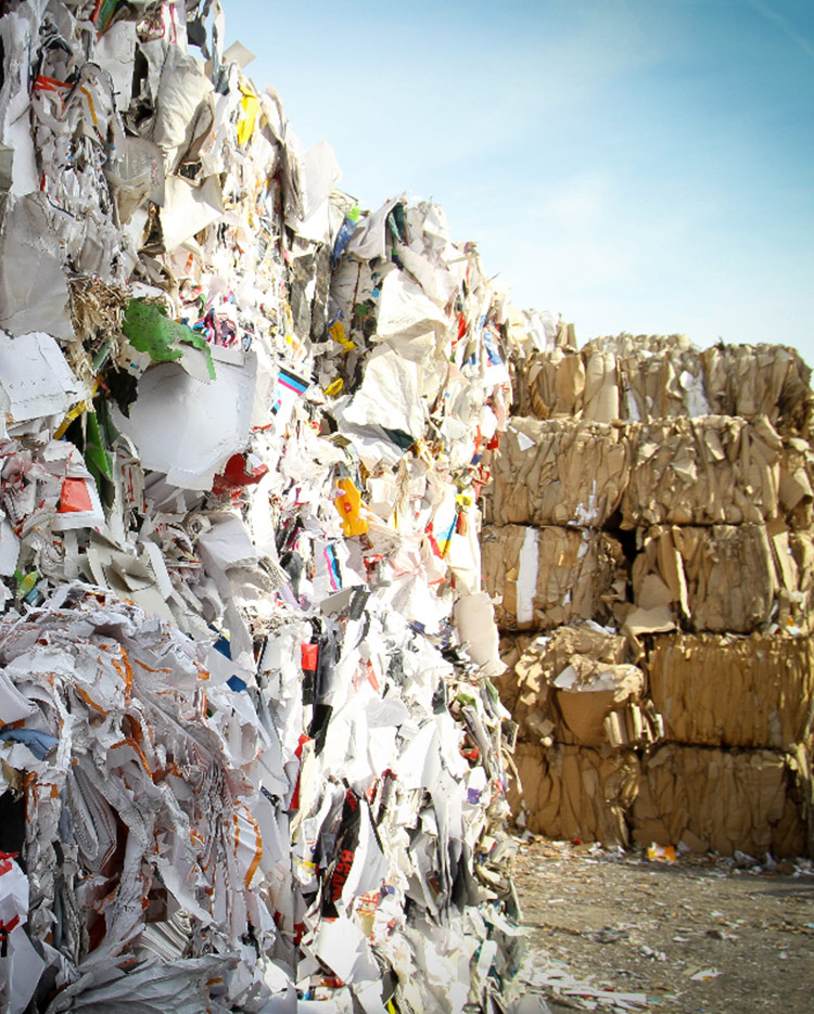 Seashore Waste Management
